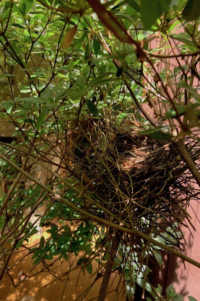 Refurbished nest is ready for eggs